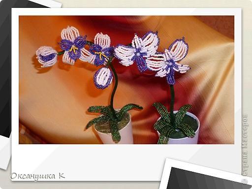 """Приветствую всех жителей и гостей замечательной Страны Мастеров! И представляю на ваш суд свои  попытки смастерить орхидеи. Так как от природы я ленивая, поэтому изобретала """"велосипед"""" сама. Бисер взяла какой был в наличии, и теперь у меня голубые орхидеи. Строение цветка тоже не совсем соответствует их истинному строению. Отсюда и название моих цветов.  Да, и еще цвести они только начинают,  у меня молоденькие экземпляры) Совместное фото . Фотоаппарат у меня новый ( для себя любимой купила) и в нем есть такая функция, что можно рамочки подбирать. Этот вид рамочек показался мне наиболее подходящим... фото 1"""