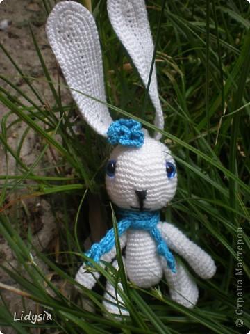 Зая голубоглазка фото 3