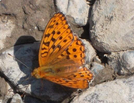 Не знаю, что нашло на бабочку, но ей, наверное, так понравилось фотографироваться, что она решила попозировать мне на моей же руке. фото 12