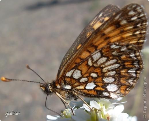 Не знаю, что нашло на бабочку, но ей, наверное, так понравилось фотографироваться, что она решила попозировать мне на моей же руке. фото 10