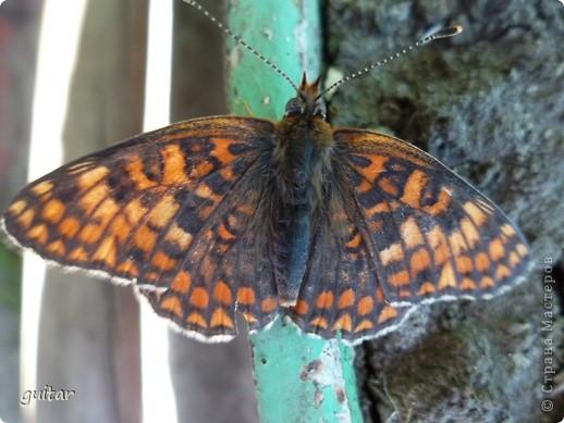 Не знаю, что нашло на бабочку, но ей, наверное, так понравилось фотографироваться, что она решила попозировать мне на моей же руке. фото 11