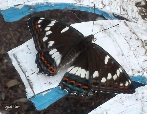 Не знаю, что нашло на бабочку, но ей, наверное, так понравилось фотографироваться, что она решила попозировать мне на моей же руке. фото 13