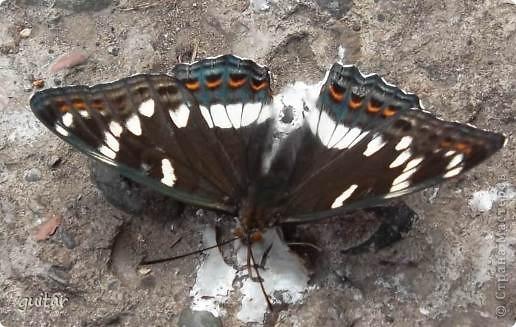 Не знаю, что нашло на бабочку, но ей, наверное, так понравилось фотографироваться, что она решила попозировать мне на моей же руке. фото 14