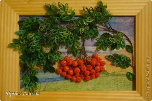 Здравствуйте , дорогие мастерицы . Рябина является одним из 12 священных деревьев Скандинавии. Эта красавица на самом деле дерево-воин, способная дать весьма жесткий отпор влиянию зла. По некоторым поверьям, она - дальний прародич первого священного дерева добра на Земле, которое засохло с приходом на нашу планету сил зла . Множество древних преданий рассказывает, что рябина - это плод истинной любви . Выставляю на ваш суд свое творение . Эту веточку сделала своей коллеге на 30-летие . Не умею еще прятать квилиннговые картины под стекло ,а здесь и не хочу . Когда берешь её в руки листочки шевелятся. Училась делать веточку по видео - МК , но не помню где нашла (давно это было ) фото 1