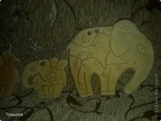 Слонопотамики фото 3