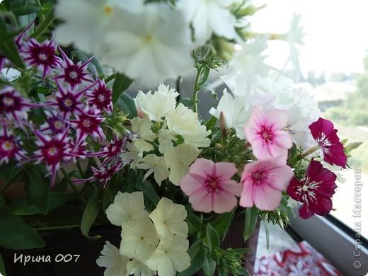 Решила запечатлеть флоксы в период бурного цветения. Скоро начну собирать семена. Приятного просмотра! фото 16