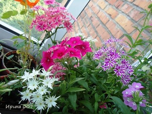 Решила запечатлеть флоксы в период бурного цветения. Скоро начну собирать семена. Приятного просмотра! фото 26