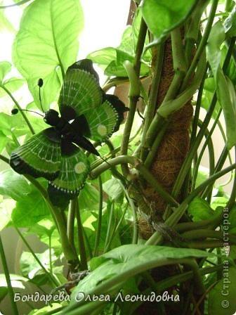 Приветствую всех мастериц. Спасибо, что заглянули в гости. Я снова к Вам с бабочками. Меня так понесло, так затянуло на создание такой красоты природы, что  не могу остановиться. Решила приукрасить своё любое растение. Пусть теперь бабочки живут и в моём доме. фото 1