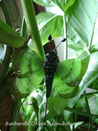 Приветствую всех мастериц. Спасибо, что заглянули в гости. Я снова к Вам с бабочками. Меня так понесло, так затянуло на создание такой красоты природы, что  не могу остановиться. Решила приукрасить своё любое растение. Пусть теперь бабочки живут и в моём доме. фото 2