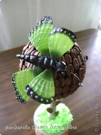 Приветствую всех мастериц. Спасибо, что заглянули в гости. Я снова к Вам с бабочками. Меня так понесло, так затянуло на создание такой красоты природы, что  не могу остановиться. Решила приукрасить своё любое растение. Пусть теперь бабочки живут и в моём доме. фото 4
