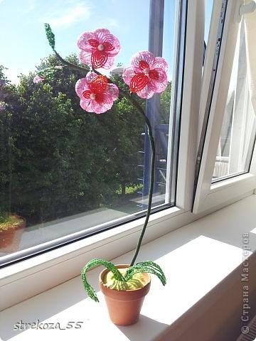 orhideja фото 2