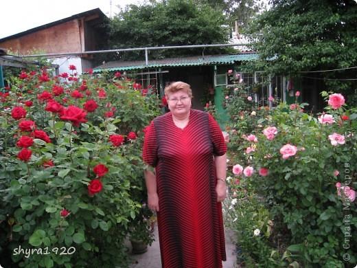 Я не шутила, когда писала, что роз у меня было 50 кустов. фото 27
