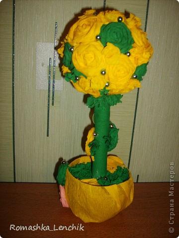 Мои любимые деревца. деревца счастья.  фото 1
