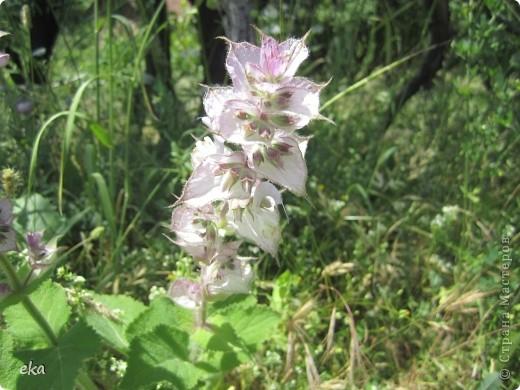 В кишлаке, где стоит наша пасека, все ветки просто ломятся от плодов. Это благодаря труду людей и наших пчёлок, они так тщательно собирают пыльцу и нектар, все цветочки опыляют. фото 14