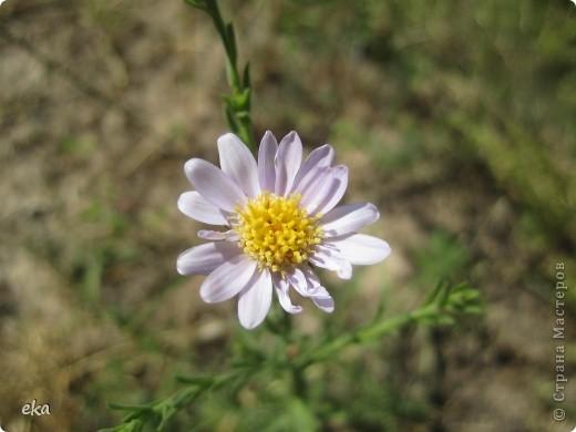 В кишлаке, где стоит наша пасека, все ветки просто ломятся от плодов. Это благодаря труду людей и наших пчёлок, они так тщательно собирают пыльцу и нектар, все цветочки опыляют. фото 17