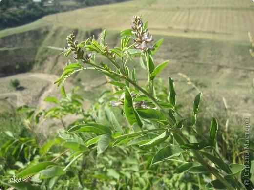 В кишлаке, где стоит наша пасека, все ветки просто ломятся от плодов. Это благодаря труду людей и наших пчёлок, они так тщательно собирают пыльцу и нектар, все цветочки опыляют. фото 18