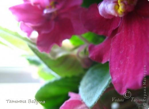 """Мое пурпурное пламя любви "" фото 9"