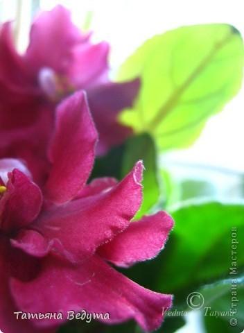 """Мое пурпурное пламя любви "" фото 10"