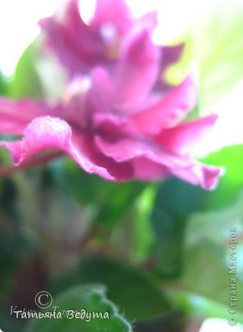"""Мое пурпурное пламя любви "" фото 13"