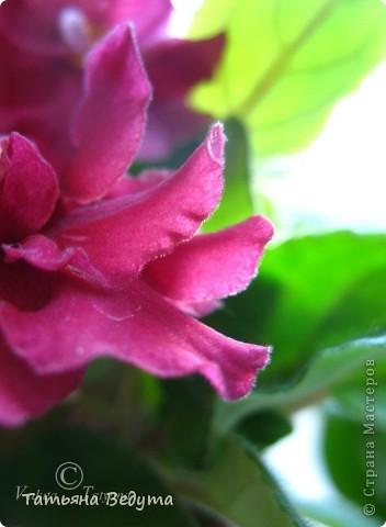 """Мое пурпурное пламя любви "" фото 15"