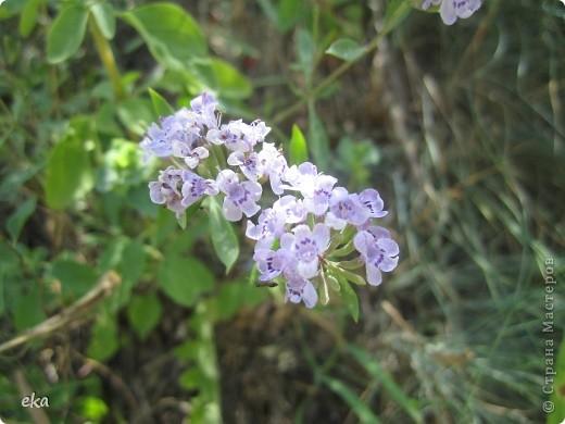 В кишлаке, где стоит наша пасека, все ветки просто ломятся от плодов. Это благодаря труду людей и наших пчёлок, они так тщательно собирают пыльцу и нектар, все цветочки опыляют. фото 20