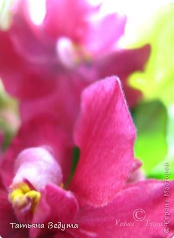 """Мое пурпурное пламя любви "" фото 2"