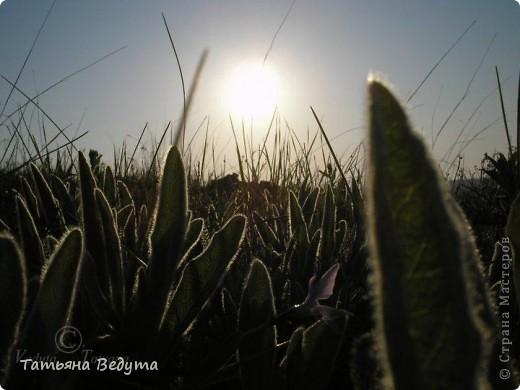 """Фото  """"Весна в степи"""" фото 5"""