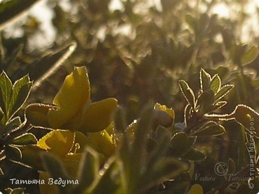 """Фото  """"Весна в степи"""" фото 7"""