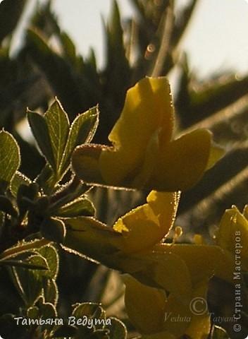 """Фото  """"Весна в степи"""" фото 8"""