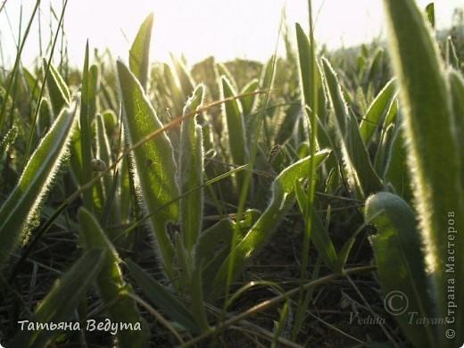 """Фото  """"Весна в степи"""" фото 9"""