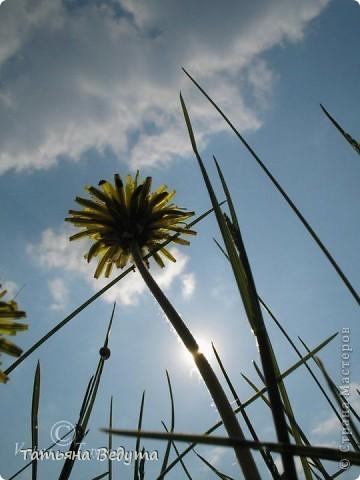 """Фото  """"Весна в степи"""" фото 3"""