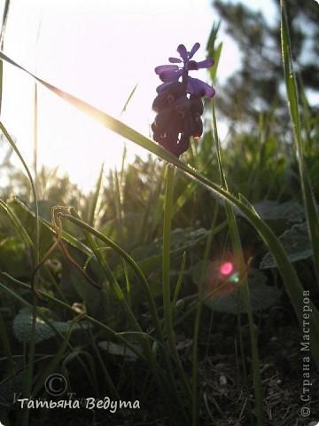 """Фото  """"Весна в степи"""" фото 1"""