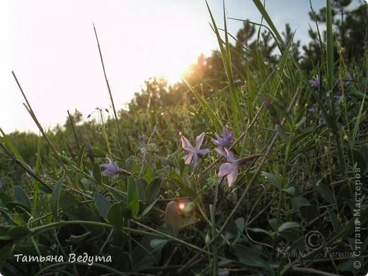 """Фото  """"Весна в степи"""" фото 10"""