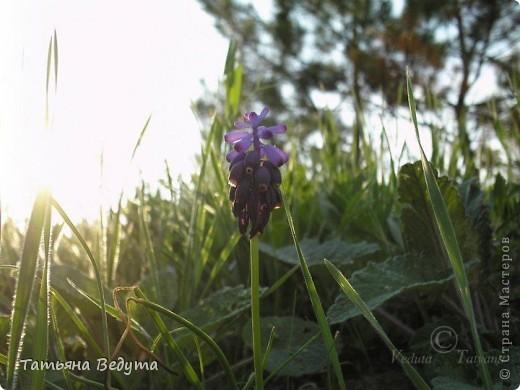 """Фото  """"Весна в степи"""" фото 11"""