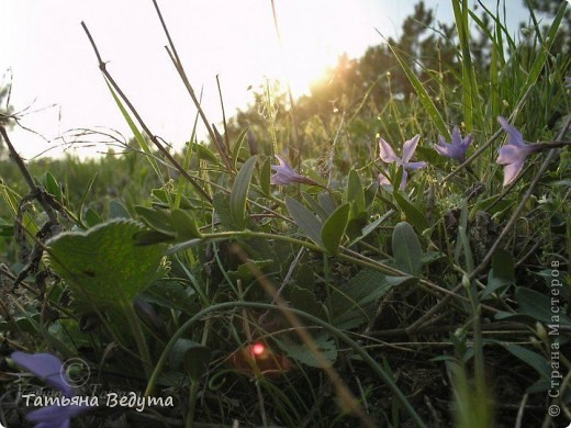 """Фото  """"Весна в степи"""" фото 12"""