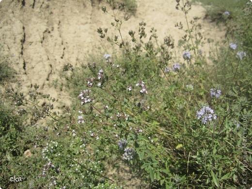 В кишлаке, где стоит наша пасека, все ветки просто ломятся от плодов. Это благодаря труду людей и наших пчёлок, они так тщательно собирают пыльцу и нектар, все цветочки опыляют. фото 23