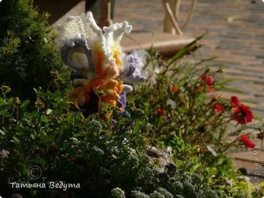 3 мои работы вместе -проект ландшафта , его исполнение- высадка растений  и ангелы  фото 13
