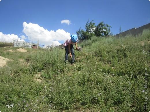 В кишлаке, где стоит наша пасека, все ветки просто ломятся от плодов. Это благодаря труду людей и наших пчёлок, они так тщательно собирают пыльцу и нектар, все цветочки опыляют. фото 25