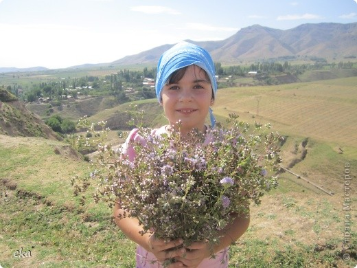 В кишлаке, где стоит наша пасека, все ветки просто ломятся от плодов. Это благодаря труду людей и наших пчёлок, они так тщательно собирают пыльцу и нектар, все цветочки опыляют. фото 26