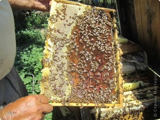 В кишлаке, где стоит наша пасека, все ветки просто ломятся от плодов. Это благодаря труду людей и наших пчёлок, они так тщательно собирают пыльцу и нектар, все цветочки опыляют. фото 27