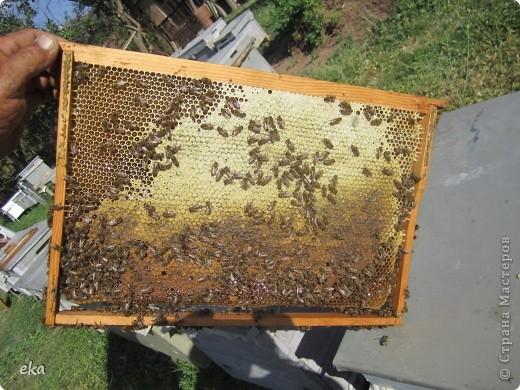 В кишлаке, где стоит наша пасека, все ветки просто ломятся от плодов. Это благодаря труду людей и наших пчёлок, они так тщательно собирают пыльцу и нектар, все цветочки опыляют. фото 28