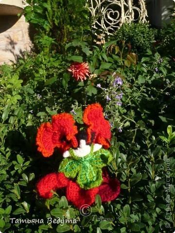 3 мои работы вместе -проект ландшафта , его исполнение- высадка растений  и ангелы  фото 16