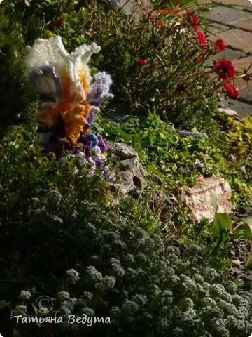 3 мои работы вместе -проект ландшафта , его исполнение- высадка растений  и ангелы  фото 18