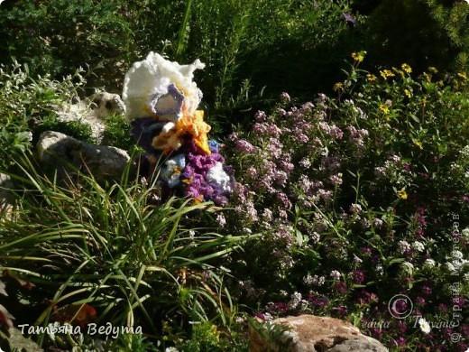 3 мои работы вместе -проект ландшафта , его исполнение- высадка растений  и ангелы  фото 25