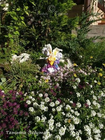 3 мои работы вместе -проект ландшафта , его исполнение- высадка растений  и ангелы  фото 31