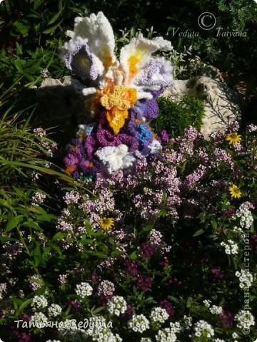3 мои работы вместе -проект ландшафта , его исполнение- высадка растений  и ангелы  фото 29
