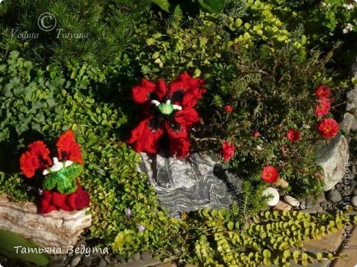 3 мои работы вместе -проект ландшафта , его исполнение- высадка растений  и ангелы  фото 26