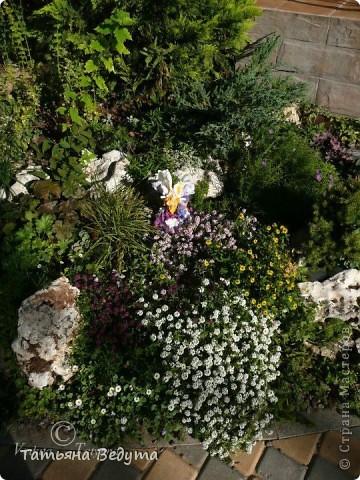 3 мои работы вместе -проект ландшафта , его исполнение- высадка растений  и ангелы  фото 12