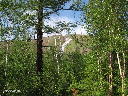 Здравствуйте , дорогие жители Страны !!! Сегодня у нас настоящее лето , +25 , погода замечательная ! А мы решили прокатиться на турбазу , поели шашлыков и погуляли на свежем ввоздухе.Специально взяла фотоаппарат , что бы показать ВАМ красоту северной природы. фото 23