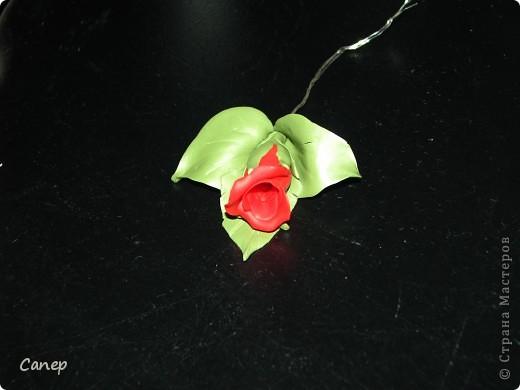 Бутон Розы фото 1